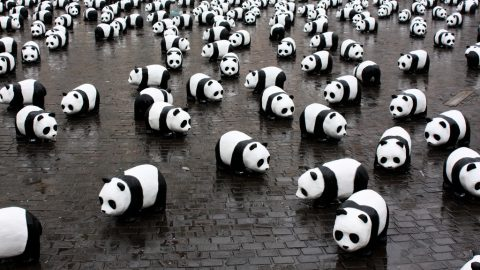 To Save Pandas, We Must Eat them