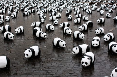 To Save Pandas, We Must Eat them
