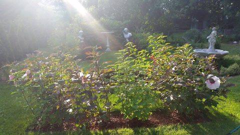 America: The Secret Garden